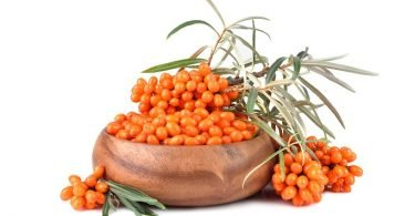 Sea Buckthorn berries along with leaves