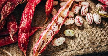 Borlotti beans- a healthy and nutritious diet